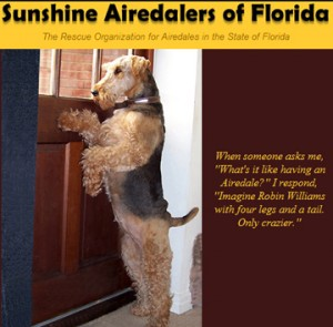 Airedale Adoptions for Florida!