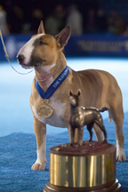 '05 Winner now Therapy Dog!
