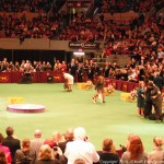 """Sadie"" Wins Announcement at Westminster - Click!"