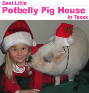 Pot Belly Pigs make great family pets!