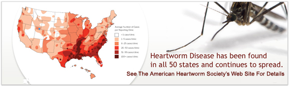 You really do need to continue heartworm preventative ON TIME ALL YEAR!